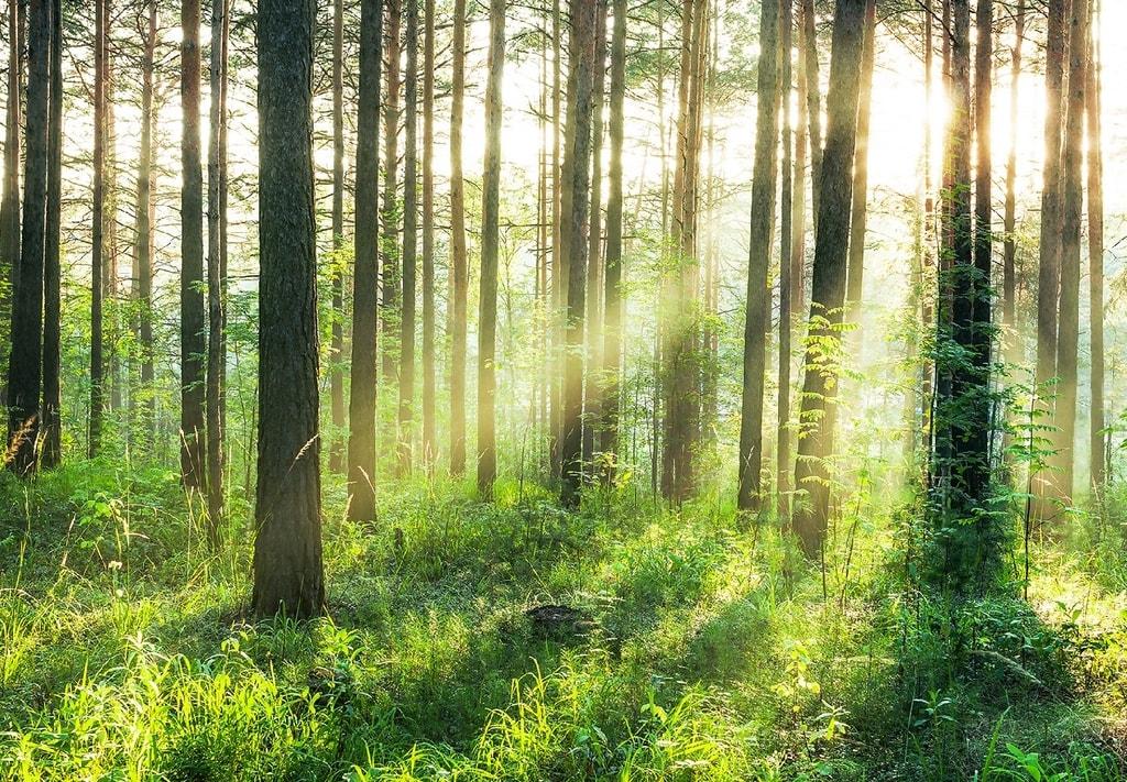Wizard+Genius W+G vliesová fototapeta Západ slnka v lese 366x254 cm